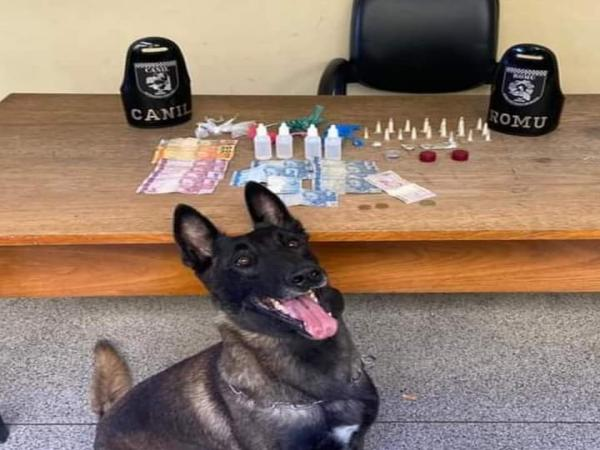Canil da GM encontra drogas escondidas em terreno; um traficante foi preso