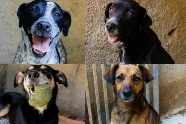 Para arrecadar fundos, Amora Proteção Animal promove campanha 'Seguidor Legal'